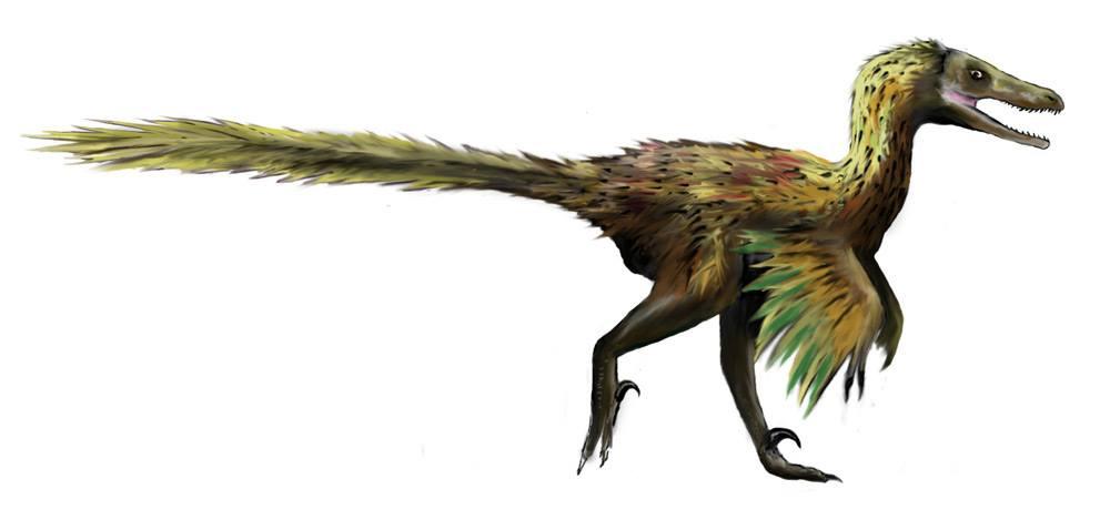 O verdadeiro Velociraptor numa ilustração de Adam S. Smith (2012)