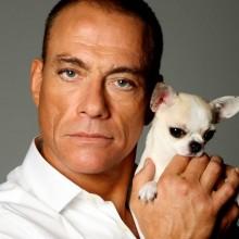 Van Damme quer uma vaguinha em Os Vingadores 2!